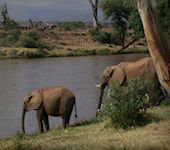 Samburu nationaal reservaat