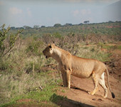 Tsavo West Nationaal Park